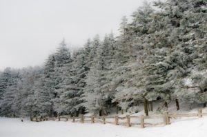 Roan Mountain Snow