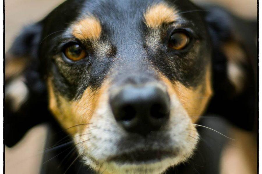 Shelter Dog Photography
