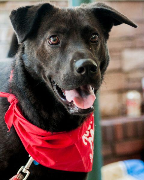Rescue Pet Photography